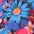 FUCHSIA CORNFLOWER BLUE